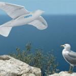 Smartbird de Festo - Robot Oiseau #1