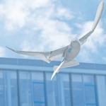 Smartbird de Festo - Robot Oiseau #2