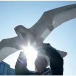 Smartbird de Festo - Robot Oiseau #4
