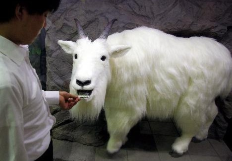 Robot Goat #1